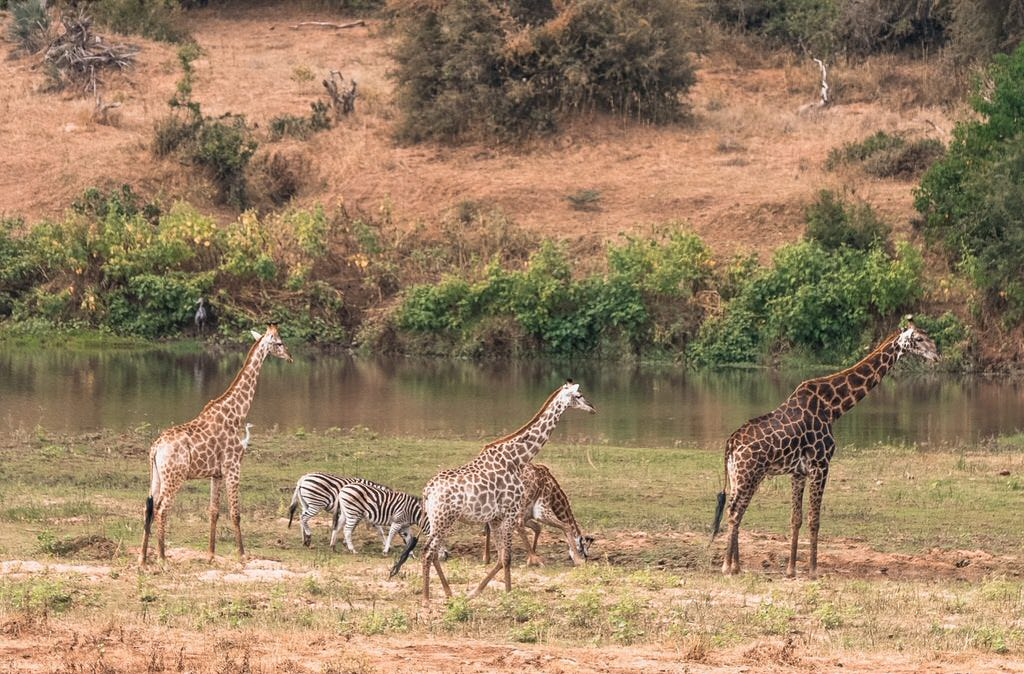 Safari ethically without harming wildlife